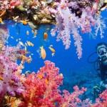 Дайвинг на рифах